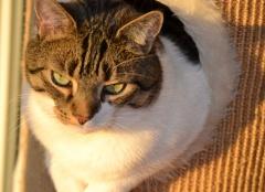 Katze in der Herbstsonne