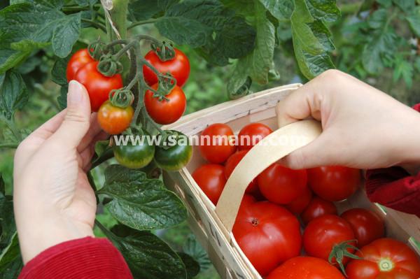 HeidivomLande, Blog, Sannmann, Bio, Demeter, Der Blog aus und für Bergedorf, Tomatenfest, Selbsternte, Treckerfahrten, Paddelfahrten, Gemüse, Vier- und Marschlande