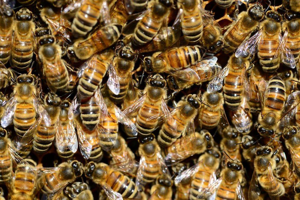 Bienenseuche, Biene, Billwerder, Neuallermöhe, Marschgebiet, Amerikanische bösartige, Faulbrut, Honig