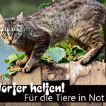 NDR 90,3, Hamburg, Bergedorf, NRW, Flutopferhilfe für die Tiere, Tiere in Not in NRW, Spendenaktion, Tierfutter, Sachspenden, HEIDI VOM LANDE